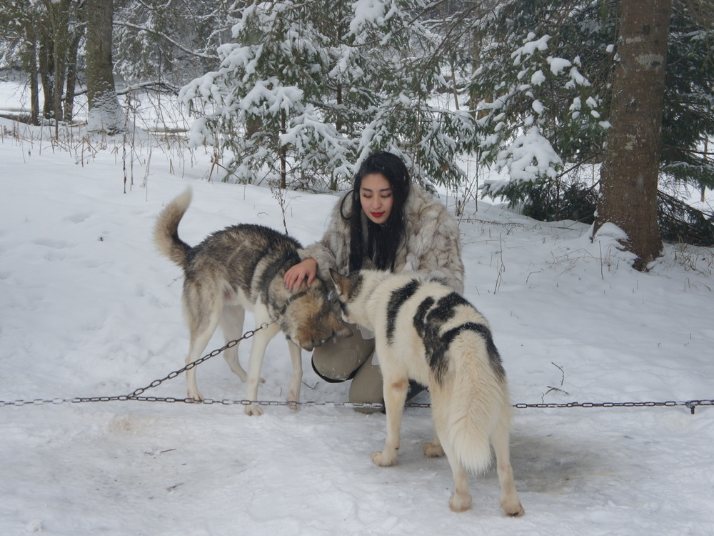 Amazing experience with Husky dog sledding in Latvia!