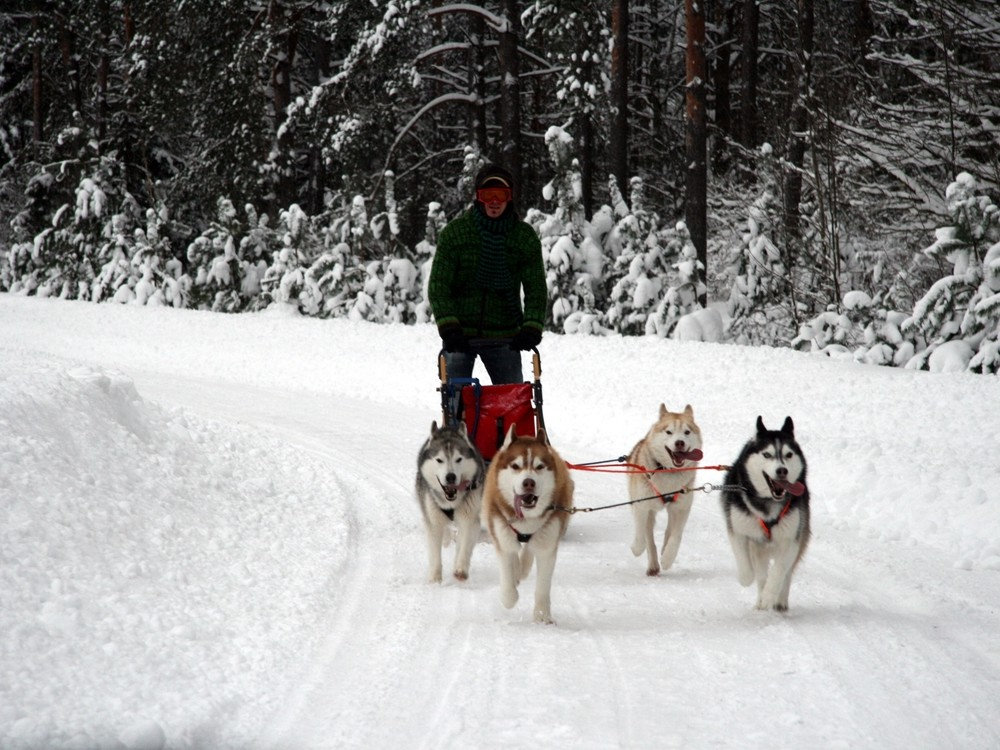 ACTIVE TOURS / LATVIA /  HUSKY DOG SLEDDING TOUR