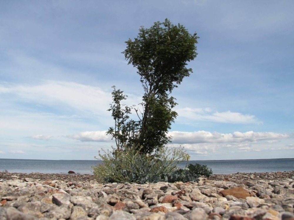 ONE DAY TOUR / ESTONIA / SAAREMAA ISLAND