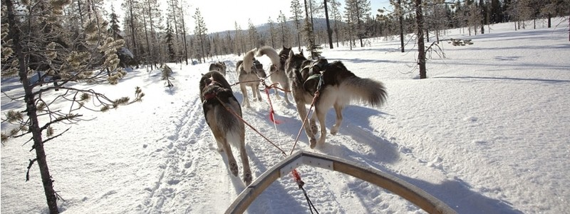 ACTIVE / ESTONIA / DOG SLEDGE TOUR FROM TALLINN